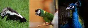Animal_photo
